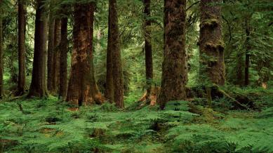PACIFIC TEMPERATE RAINFOREST