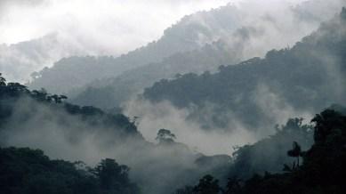 Costa_Rica_Cloud_Forest_Reserve_Montevideo_Wallpaper_1920x1080