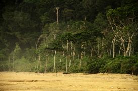 Jati-The-last-low-land-tropical-rain-forest-in-Java-Island