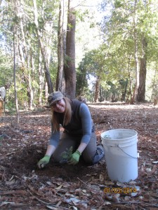 volunteer planting trees