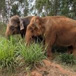 Anisha and Gowri 2