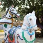 horsesimg_6528-4