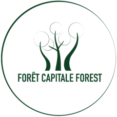 Forêt Capitale Forest