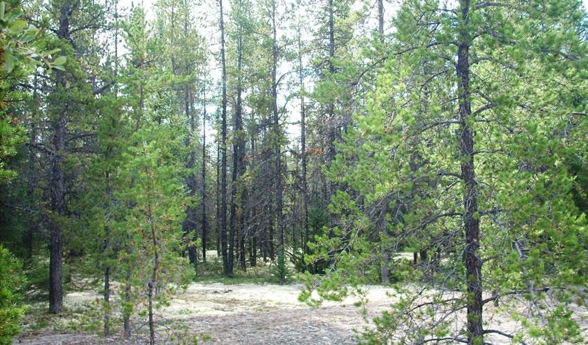 recherches sur les Dynamiques forestières