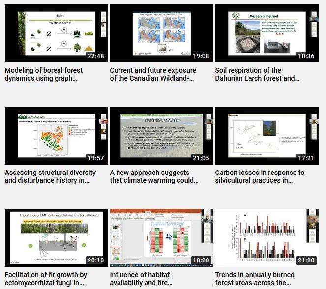 chaîne vidéos Forêts Froides
