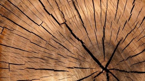 Pluribois formation bois