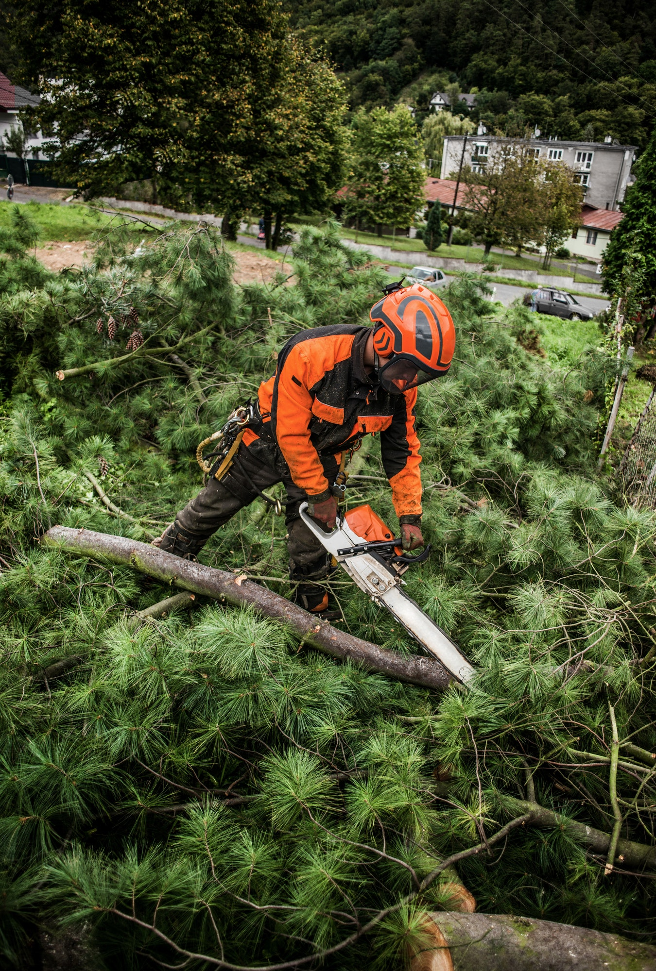 Lumberjack with chainsaw cutting a tree in town.
