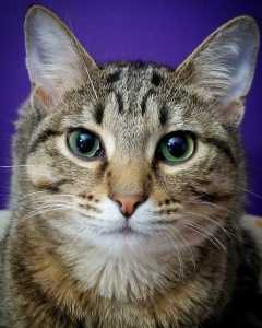 PetRescue Pet of the Week: Roger - Forever Fortunate Felines