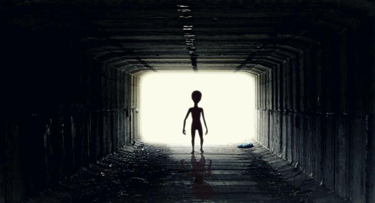 alien field guide