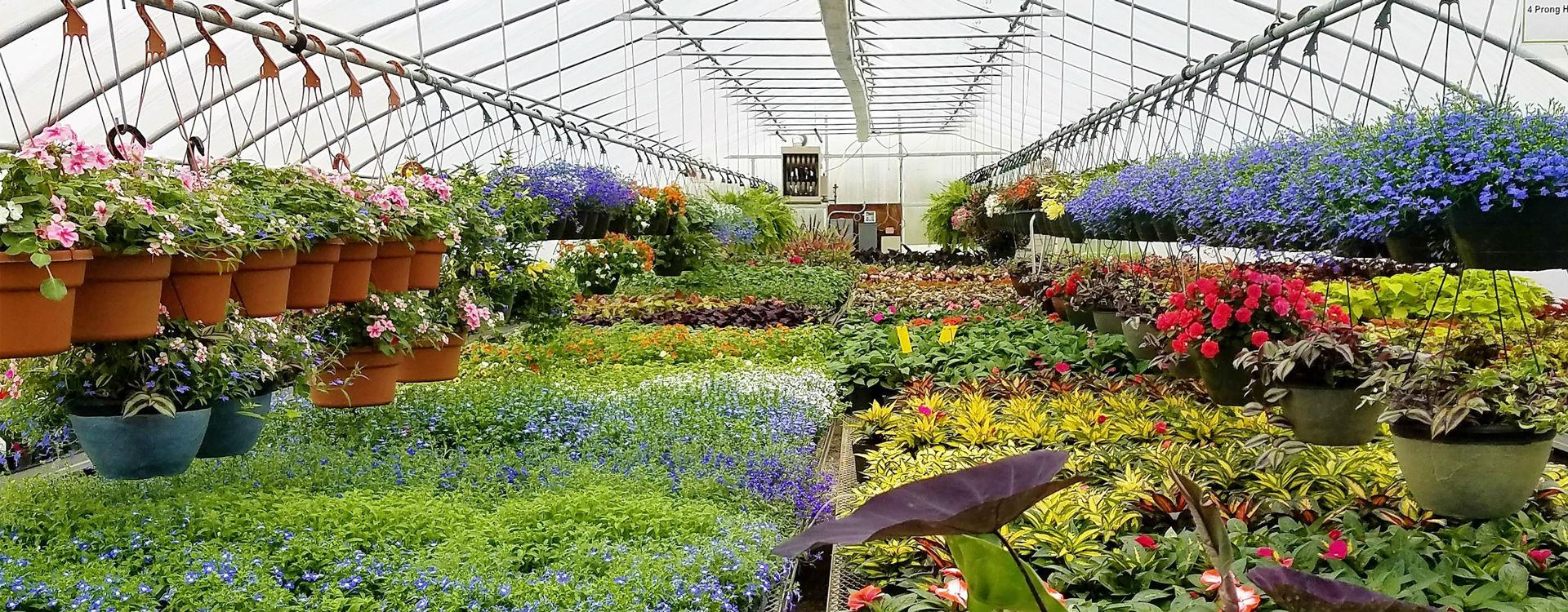 Unique House Plants