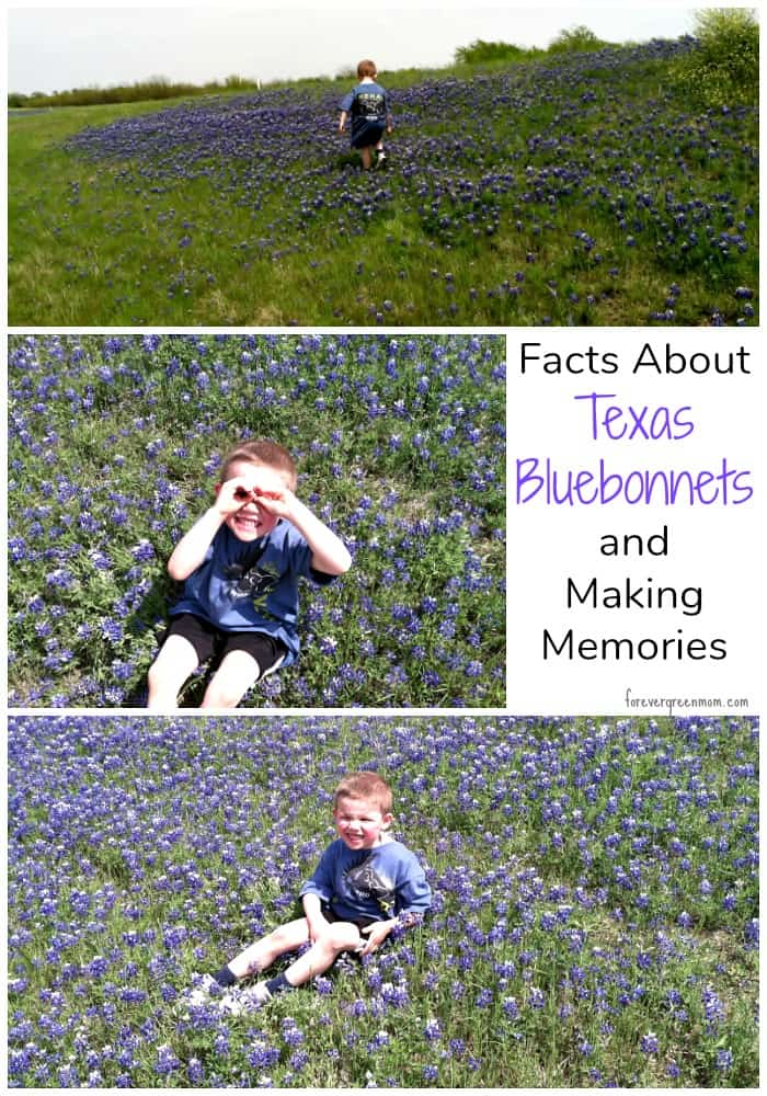 Facts About Texas Bluebonnets AND Making Memories #texasbluebonnets