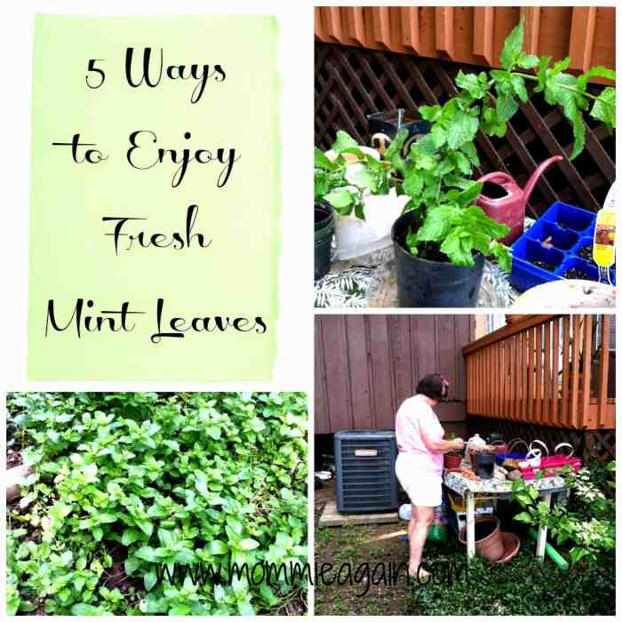 5 Ways to Enjoy Fresh Mint Leaves
