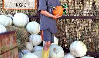 Adventure at Lone Star Family Fun Pumpkin Patch Stephenville, TX