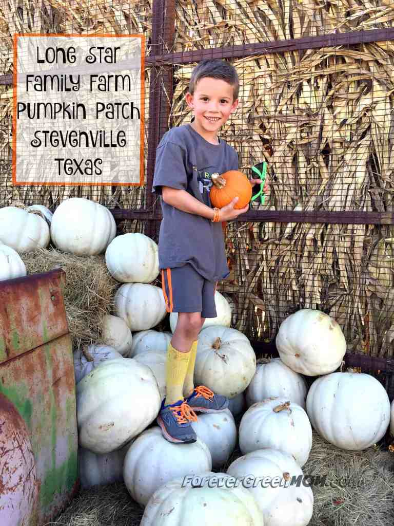 lone-star-family-farm-pumpkin-patch-stevenville-tx