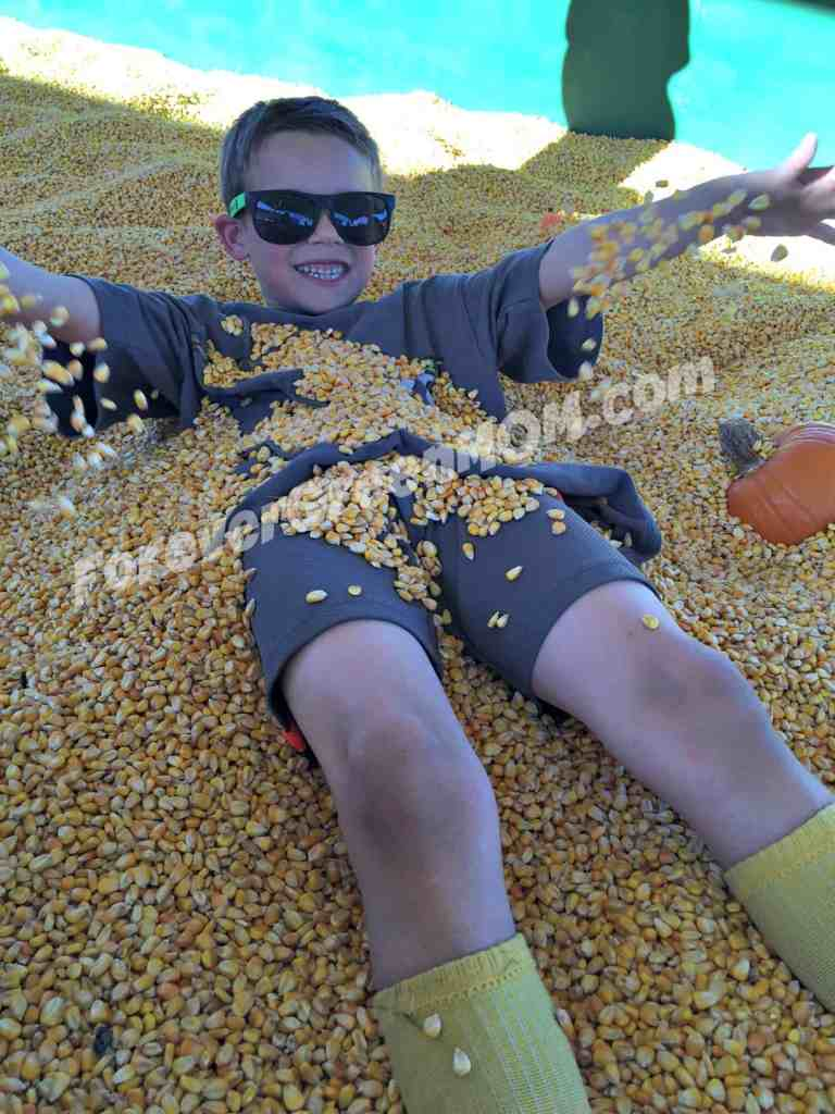 lone-star-family-farm-corn
