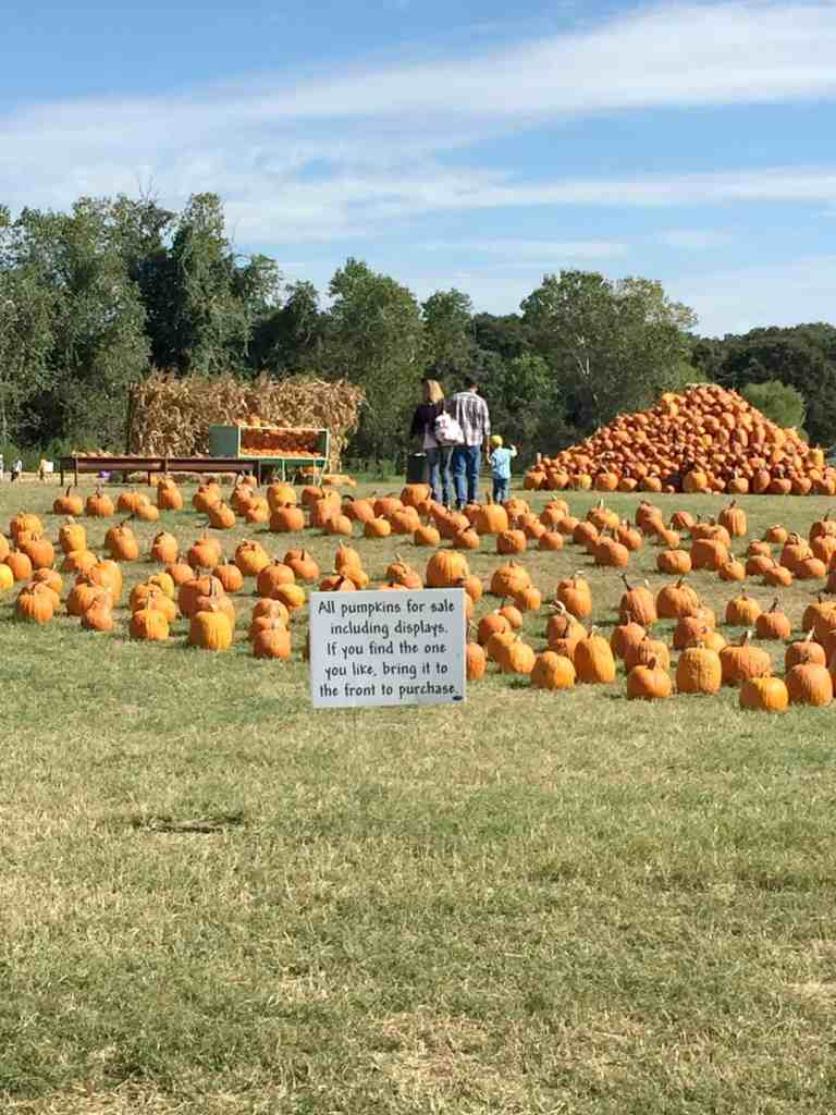 lone-star-family-farm-pumpkins