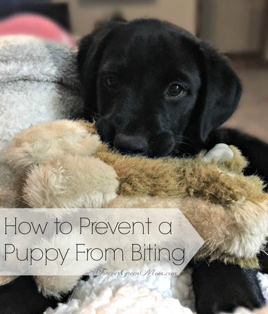 How to Prevent a Puppy From Biting