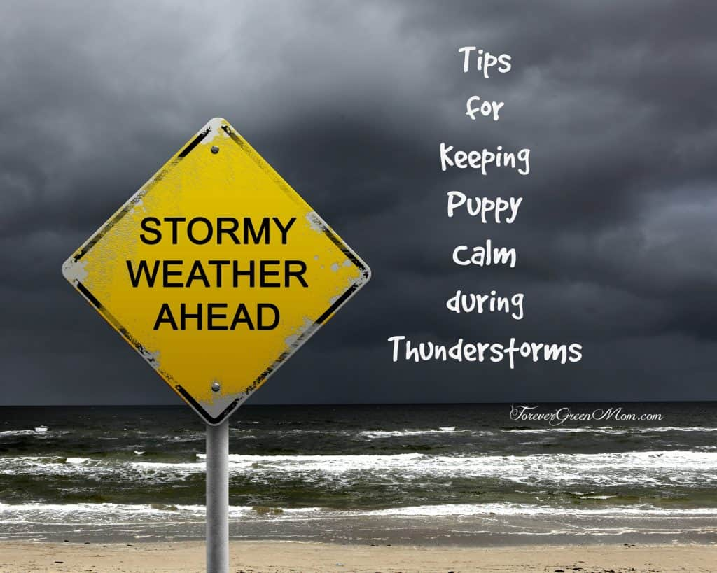 Tips for Keeping Puppy Calm During Thunderstorms