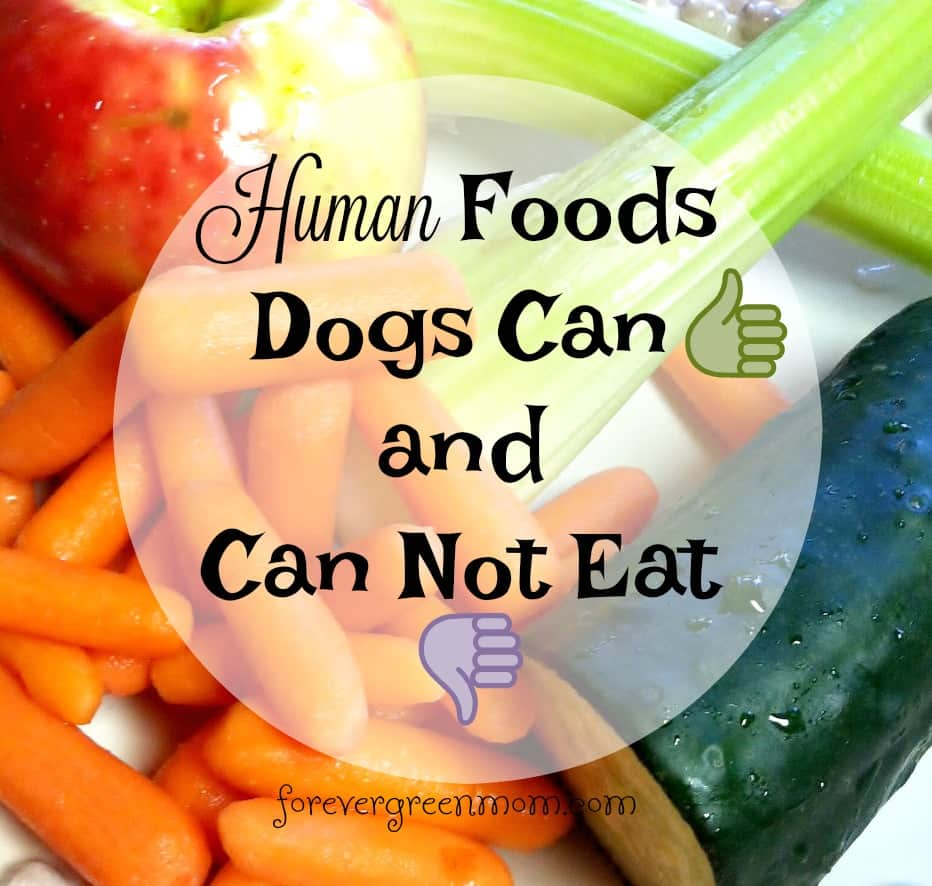 Human Foods Dogs Can and Can Not Eat