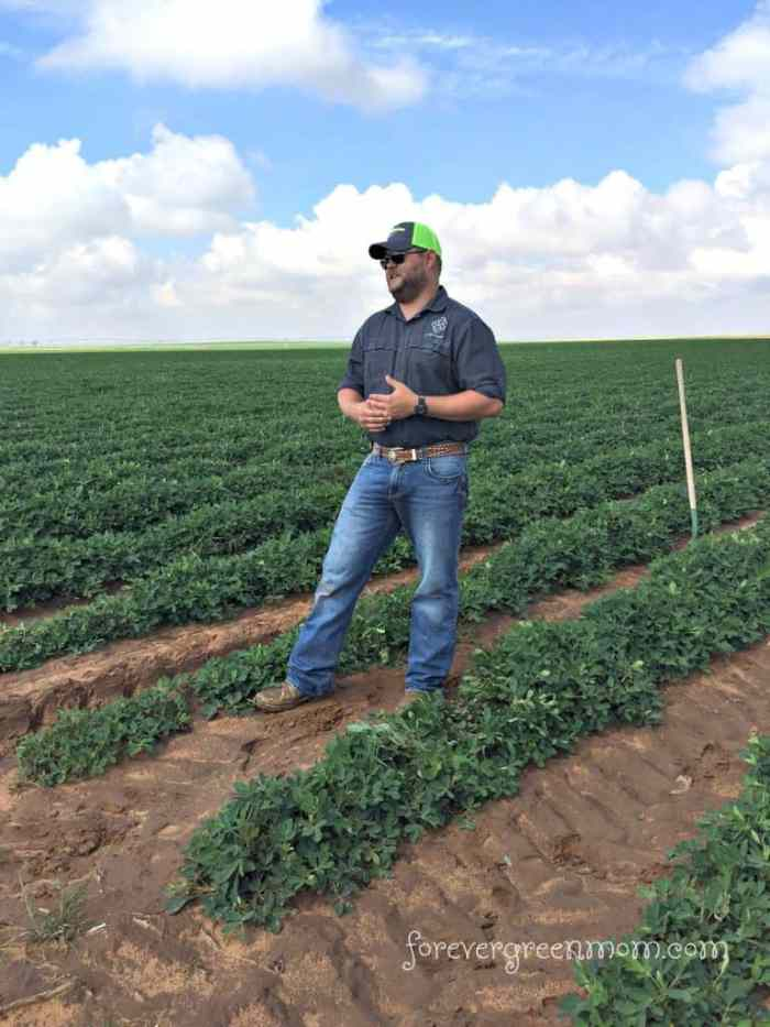 Texas Peanut Tour, Farmers, & Recipe