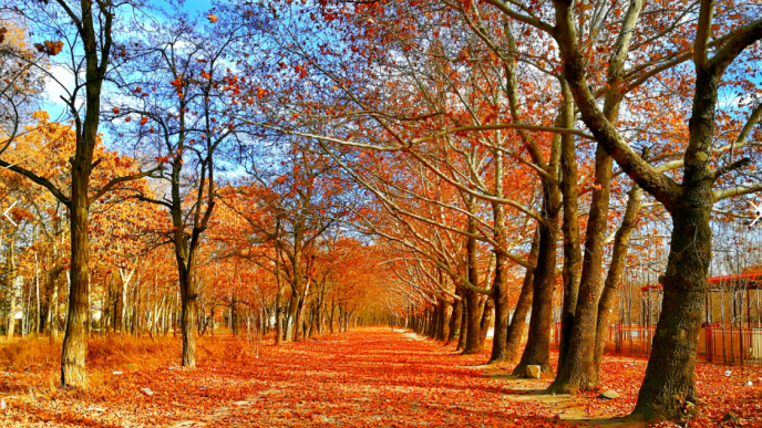 10 of the best reasons to travel in fall - Forever Lost In Travel