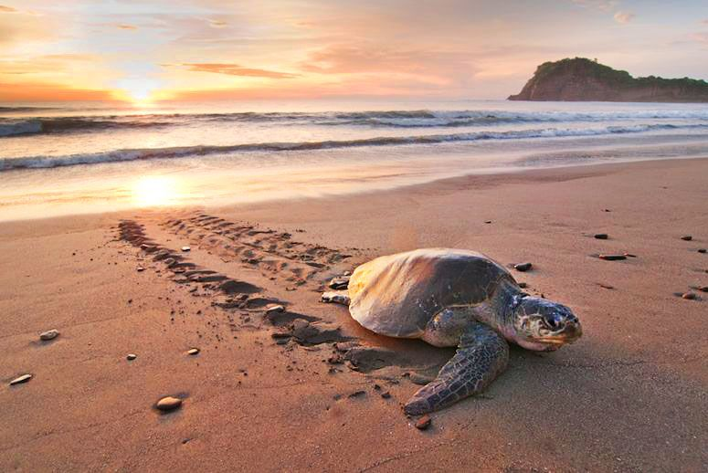 turtle-beach-sunset-top-best-explore