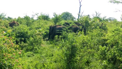 safari-elephants-jungle