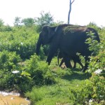 Sri lanka safari-national park sri lanka