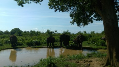 elephants-national park-visit sri lanka