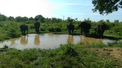 visit-national-park-elephants-sri lanka