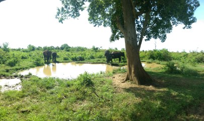 best park-visit-sri lanka-elephants