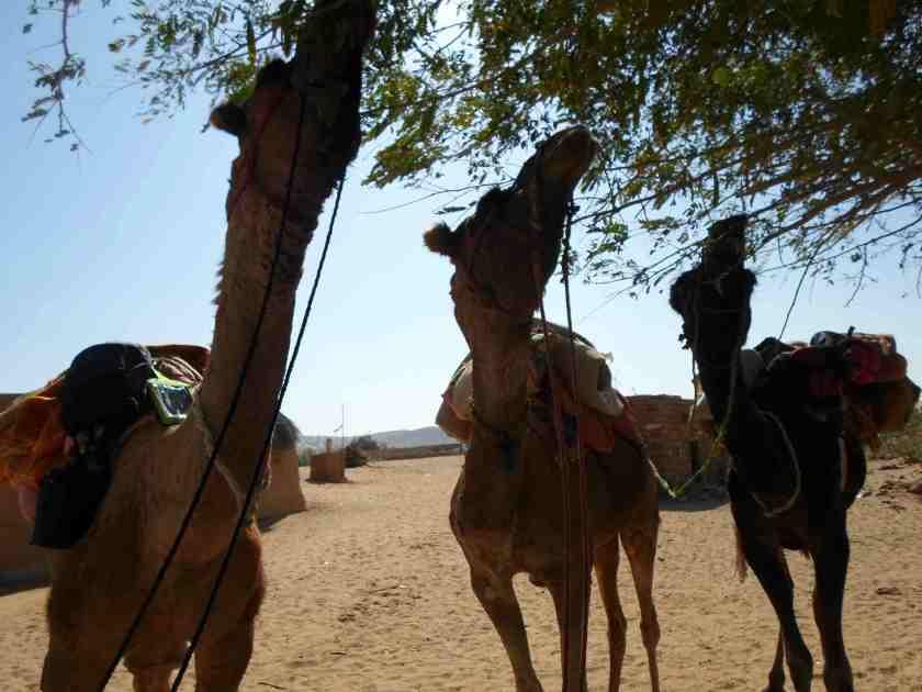 thar-desert-jaisalmer