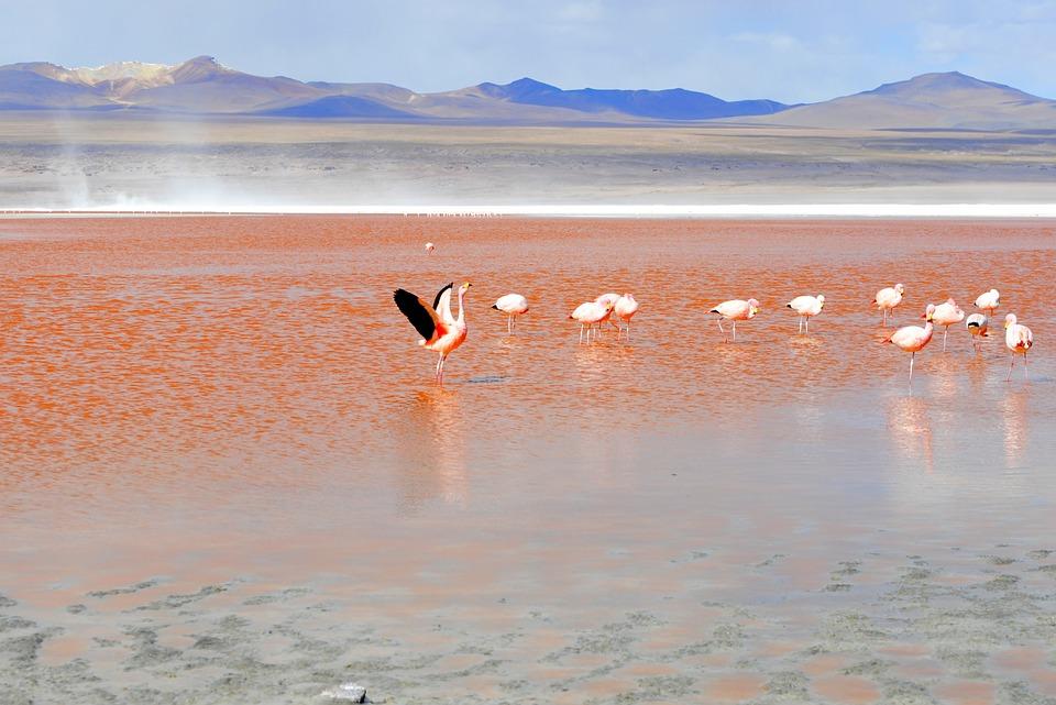 Re-lake-Bolivia-Flamingo