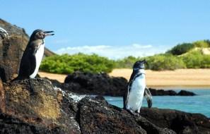 penguins-galapagos