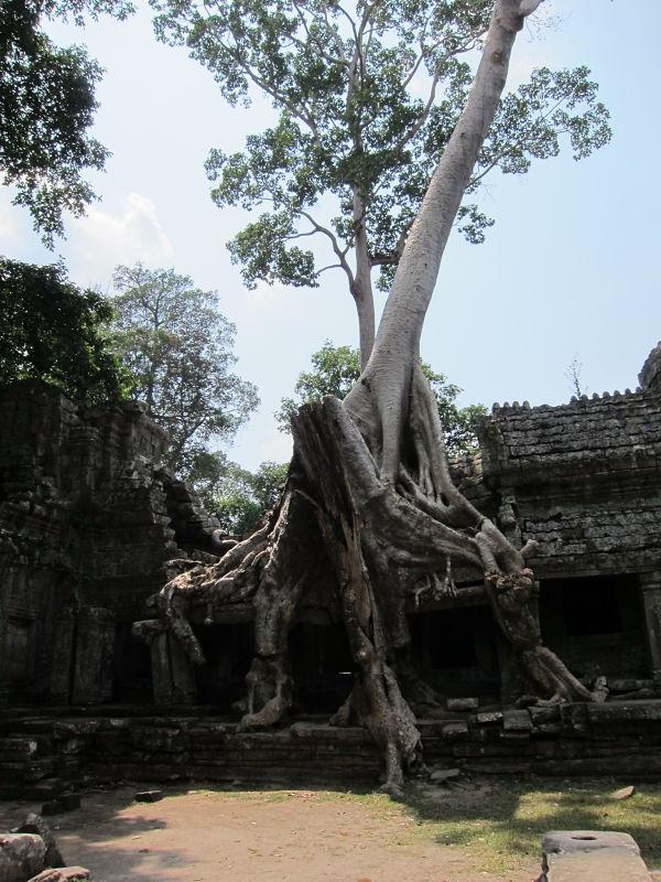 Ta-Prohm-ruins-cambodia-angkor-wat-tree