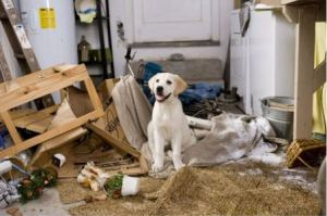 dog-destroyed-house