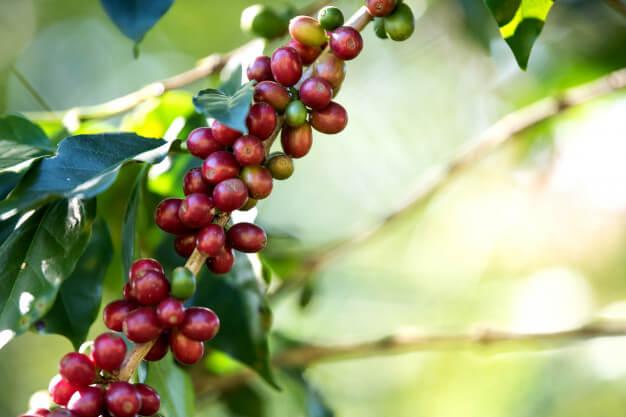 El Café, Invertir en Commodities