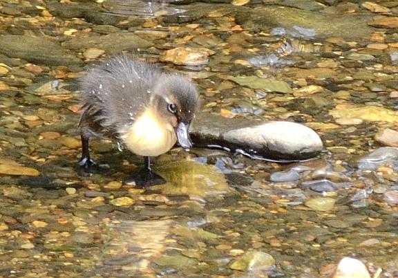 The last ducklling alone