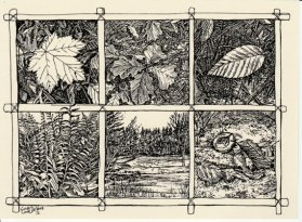https://www.etsy.com/ca/listing/240339472/leaf-sketches-this-6-pack-of-blank-ivory