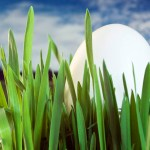 Egg hiding in a field of grass