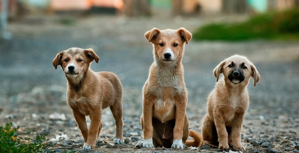 dogs-984015_1280-1170×600