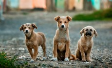 dogs-984015_1280-230×140