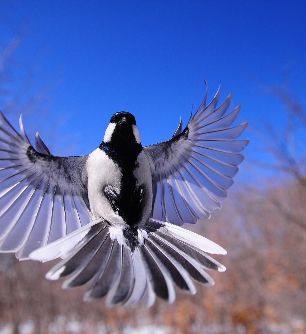 night-bird-1126076_1920-1170×1277
