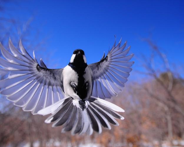night-bird-1126076_1920-625×500