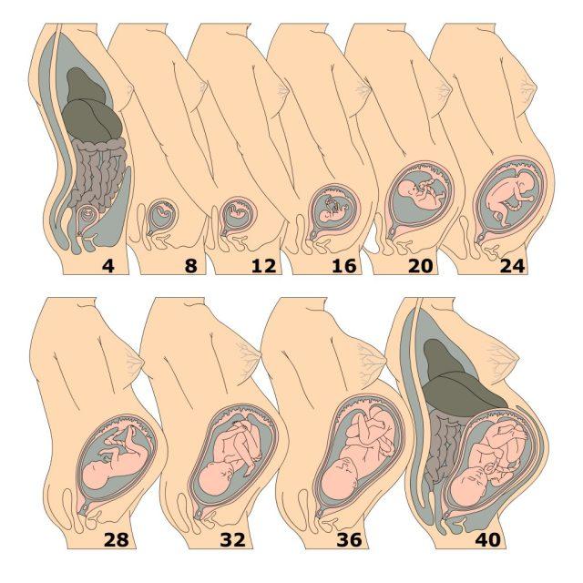 산모의 변비는 임신 중 복강 내부를 채우는 아기가 변의 움직임을 제한하면서 발생한다