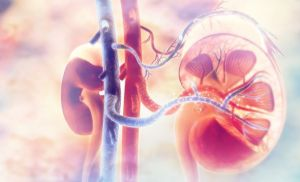 Kidney related Queries