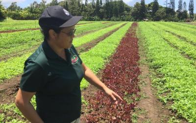 Know Your Farmers:  Aloha 'Āina Organics, Ha'ikū