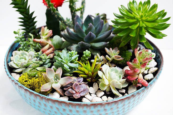 How to make a succulent and cactus planter bowl For