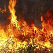 Φωτιά καίει δάσος στο Λαύριο – Δεν απειλούνται σπίτια