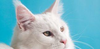 Έναρξη-δηλώσεων-συμμετοχής-στη-δράση-του-Δήμου-Μαρκοπούλουγια-τη-στείρωση-αδέσποτων-γατών